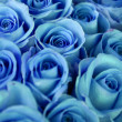 Stock Photo: Blue roses bouquet