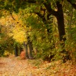 Beautiful autumn forest with walkiing path — Stock Photo