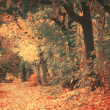 Beautiful dreamy autumn forest with walkiing path — Stock Photo #34339613