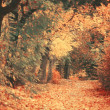 Stock Photo: Beautiful dreamy autumn forest with walkiing path