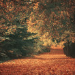 Beautiful dreamy autumn forest — Stock Photo