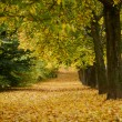 Beautiful autumn forest with walkiing path — Stock Photo #34339737