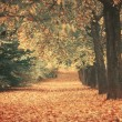 Beautiful dreamy autumn forest with walkiing path — Stock Photo #34339767