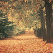 Beautiful dreamy autumn forest with walkiing path — Stock Photo