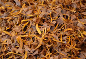 Fresh chanterelle mushrooms — Stockfoto