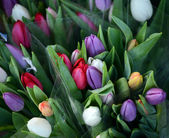 Beautiful tulips bouquet — Stock Photo