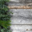 Christmas fir tree on a wooden board — Stok fotoğraf