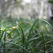 Green grass closeup, suitable for backgrounds — Stock Photo