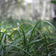 Green grass closeup, suitable for backgrounds — Stock Photo #12537140