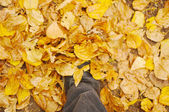 Step to the autumn — Stock Photo