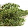 Fir tree branch on white — Stock Photo