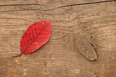 Podzimní jednokřídlé dřevěné background.with kopie prostor — Stock fotografie