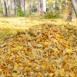Autumn leaves collected on pile — Stock Photo #13693317