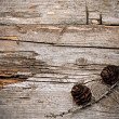 Branch of fir tree on wood - Foto de Stock
