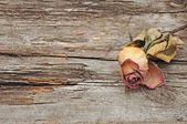 Dry rose on old wood background with copy space — Stock Photo