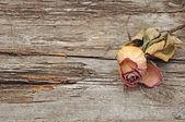 Torr rose på gamla trä bakgrund med kopia utrymme — Stockfoto