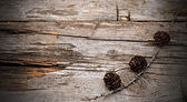 Branch of fir tree on wood — ストック写真