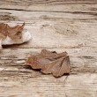 Autumn leaves over wooden background - Foto Stock