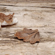 Autumn leaves over wooden background - Photo
