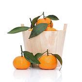 Mogen tangeriner med blad i trä hink isolerad på vit — Stockfoto
