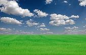 Imagem de campo de grama verde e céu azul brilhante — Foto Stock