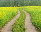 Strada che attraversa campi di colza fioriti in Kazakistan — Foto Stock