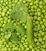 Green Peas background texture vegetable — Stock Photo