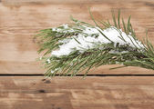 Christmas evergreen spruce tree with fresh snow against wooden w — Stock Photo