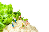 Farmers harvesting giant cauliflower — Stock Photo