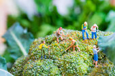 Group of farmers on a giant cauliflower — Stock Photo