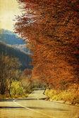 Colori d'autunnali — Foto Stock