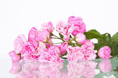 Close up on a bounch of pink roses — Stock Photo