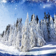 Christmas background with snowy fir trees — Stock Photo #15813505