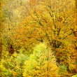 Lonely beautiful autumn trees — Stockfoto