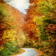Road in autumn forest — Stock Photo #15814721
