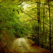 Stock Photo: Tortuous road in autumn forest