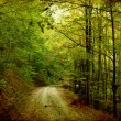 Tortuous road in autumn forest - Stock Photo