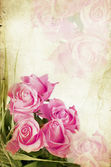 Pink roses on vintage background — Stock Photo