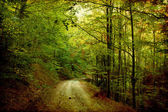 Tortuous road in autumn forest — Stock Photo