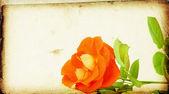 роза на фоне винтаж — Стоковое фото