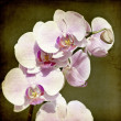 Pink orchid on vintage background — Zdjęcie stockowe