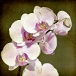 Pink orchid on vintage background — Stock fotografie