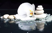 Spa with white orchid — Stock Photo