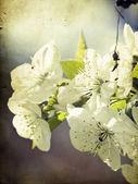 Fleur vintage — Photo