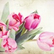 Vintage tulips — Stock Photo