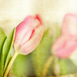 Vintage tulips — Stock Photo #25808667