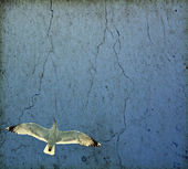 Vintage photo of flying seagull — Stock Photo