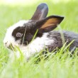 Rabbit bunny baby — Stock Photo