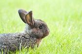 Rabbit bunny baby — Stock Photo