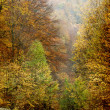 Curving road in autumn forest — Stock Photo